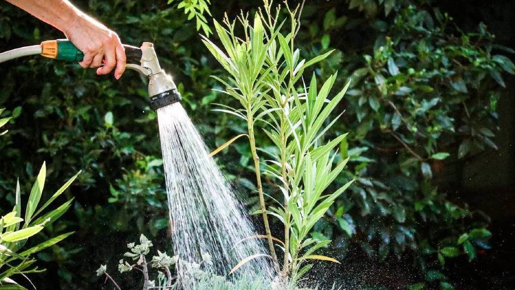 Lawns and gardens can be watered more. Photo: SHUTTERSTOCK